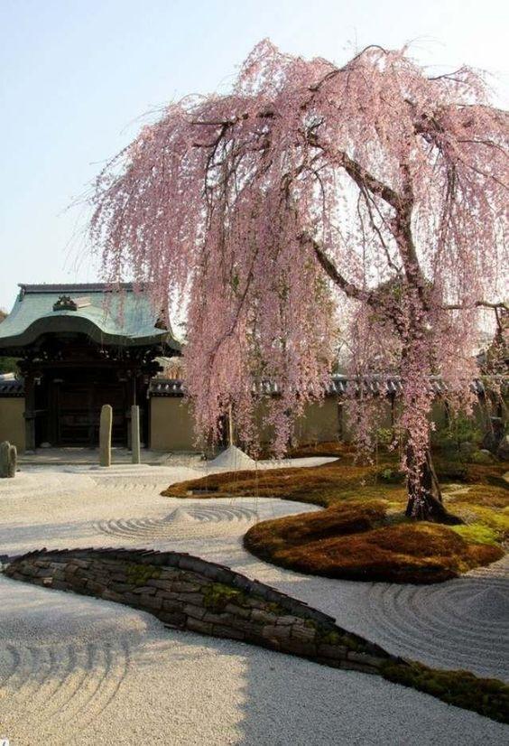 japan-garten gestaltung kirschbaum-kies stein-anlegen tipps