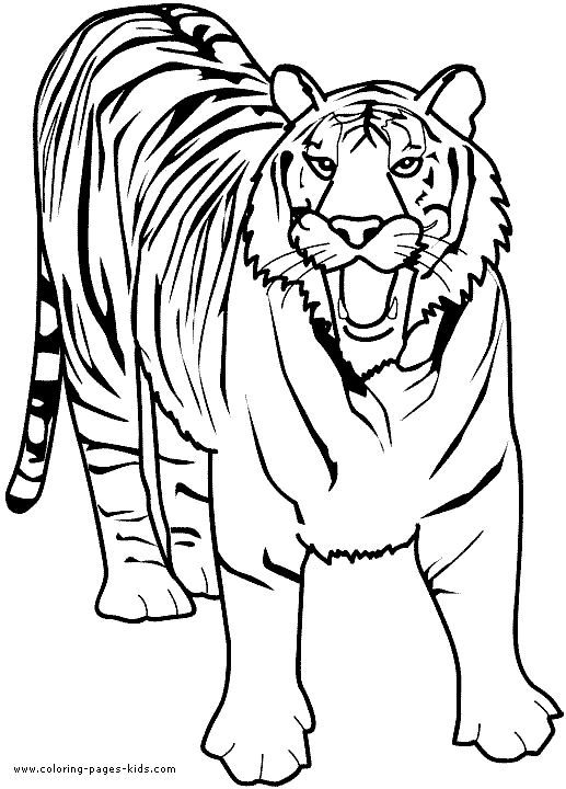Growling Tiger Color Page Zoo Animal Coloring Pages Animal Coloring Pages Tiger Drawing For Kids