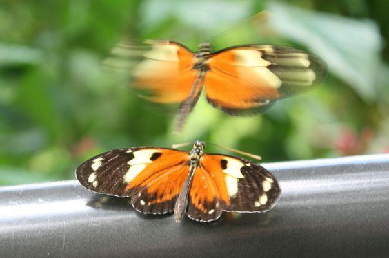 Butterfly World Fl. From butterfly lady.