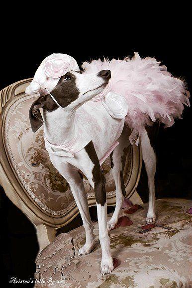 Dog Fashion Very French Oh La La