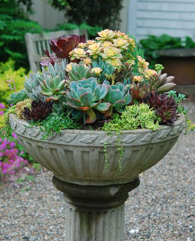 Bowl with Mixed Succulents