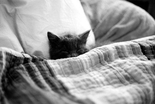 Comfy kitteh