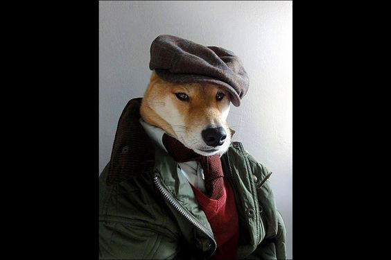 Menswear Dog
