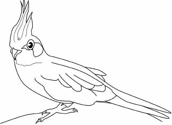 ausmalbilder, malvorlagen - papagei kostenlos zum