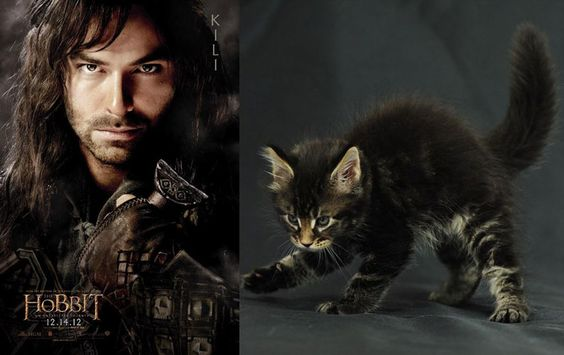 Hobbit_cats - Kili, Bofur & Elrond are priceless!