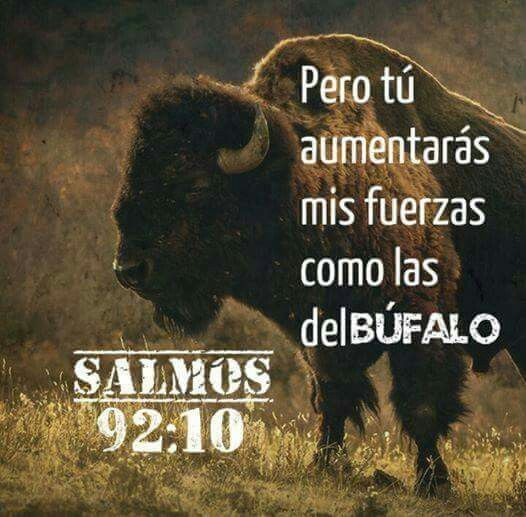 SALMO 92:10