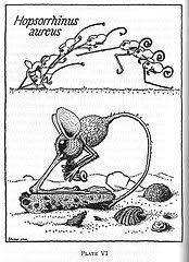 magpie & whiskeyjack: Rhinogrades and Wunderkammer about a favorite book: Harald Stümpke, Anatomie Et Biologie Des Rhinogrades — Un Nouvel Ordre De Mammifères. Masson, France (1962)