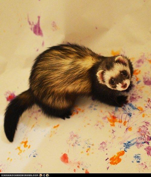 cute animals - Daily Squee: Modern Ferret Art