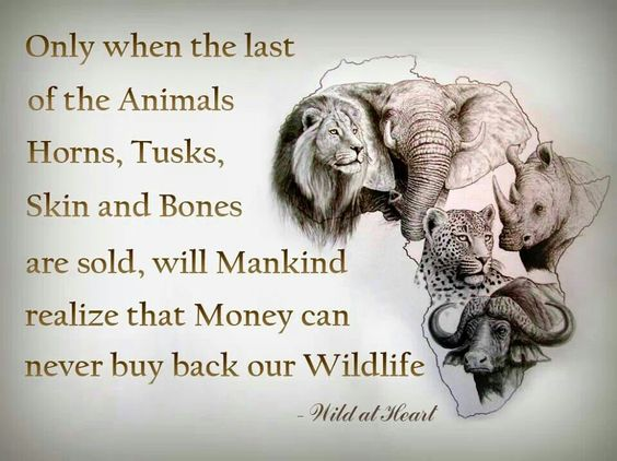 Only when the last of the animals horns,tusks,skin and bones are sold,will Mankind realize that money can never buy back our wildlife. Wild at Heart.:
