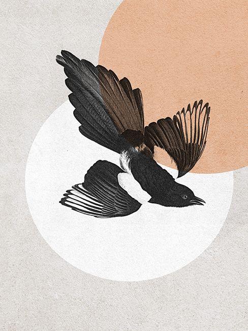 Die Diebische Elster Vogel Illustration Illustration Zeichnungen