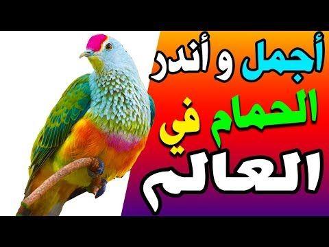 اندر و اجمل انواع الحمام في العالم Youtube Animals Parrot