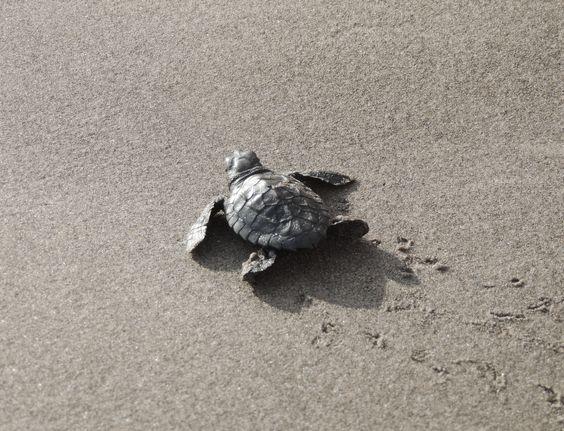 vida en la arena