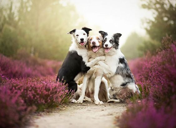 27 Adorable Pictures Of Dog Buddies That Are Best Friends! - brainjet.com