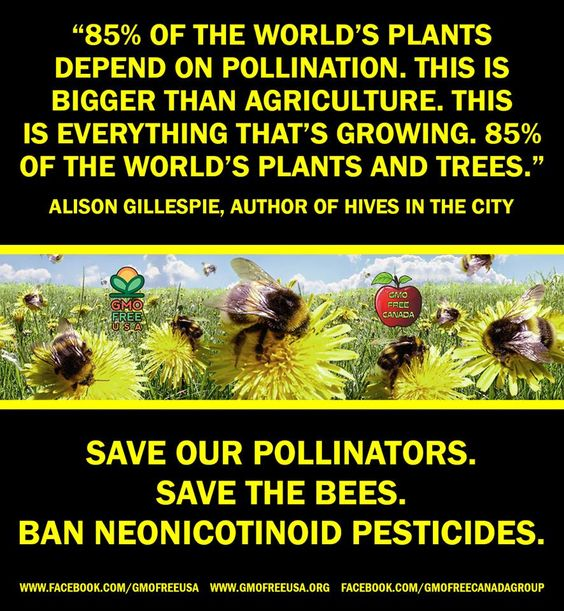 "GMO Free USA NATIONAL POLLINATOR WEEK IS JUNE 16 - 22. Please help us spread awareness about the plight of the bees and all pollinators. ""Yes, hive mites are a factor. There is no doubt that there are about eight factors in the honey bees' decline. But the [Harvard] researchers were very vocal about saying that they feel that neonicotinoids are making bees more vulnerable to those problems. 85% of the world's... See More — with Barbara Chamberlain.   www.fairtrademarket.com #fairtrade."