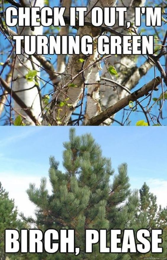tree humor.... For some reason I think this is funny... Haha