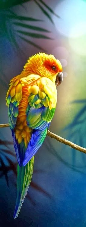 The Sun Parakeet or Sun Conure is a medium-sized brightly colored parrot native to northeastern South America. The species is endangered, threatened by loss of habitat and trapping for the pet trade.