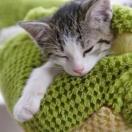 Heartworm Symptoms in Cats: http://www.catster.com/cat-health-care/heartworm-symptoms-in-cats