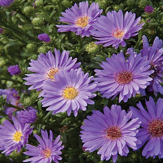 Pin On Flowers Iii