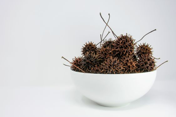 Sweet Gum Tree Spiky Balls Hang Out In A Bowl Waiting For The Chance To Poke Some Fingers 8211 Cooking More Related I In 2020 Food Healthy Gourmet Healthy Cooking