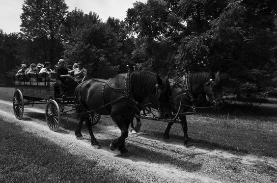 Come take a carriage ride on one of our tours at The Hermitage, Home of President Andrew Jackson. Visit www.thehermitage.com for more information.