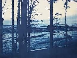trees cyanotype