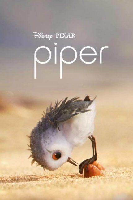 ดูหนังออนไลน์ Piper (2016) แอนิเมชั่นสั้น ฉายปะหน้า Finding Dory ผจญภัยดอรี่ขี้ลืม [HD] -  ดูหนังคลิ๊ก https://kod-hd.com/2016/11/18/piper-2016-%e0%b9%81%e0%b8%ad%e0%b8%99%e0%b8%b4%e0%b9%80%e0%b8%a1%e0%b8%8a%e0%b8%b1%e0%b9%88%e0%b8%99%e0%b8%aa%e0%b8%b1%e0%b9%89%e0%b8%99-%e0%b8%89%e0%b8%b2%e0%b8%a2%e0%b8%9b%e0%b8%b0%e0%b8%ab/