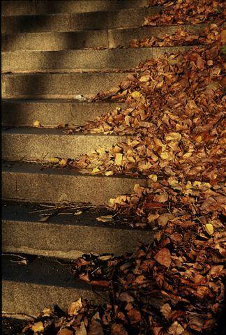 Escaliers en automne © Caroline DUEZ