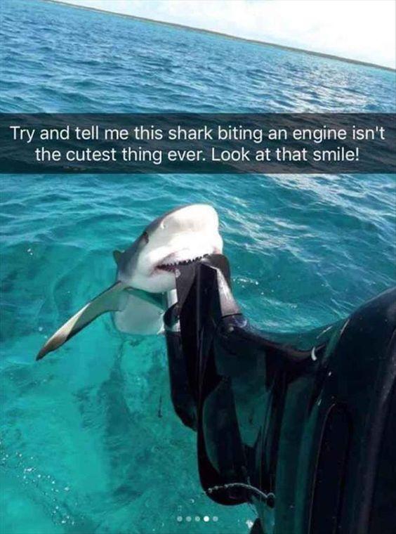 صور مضحكة سمكة قرش