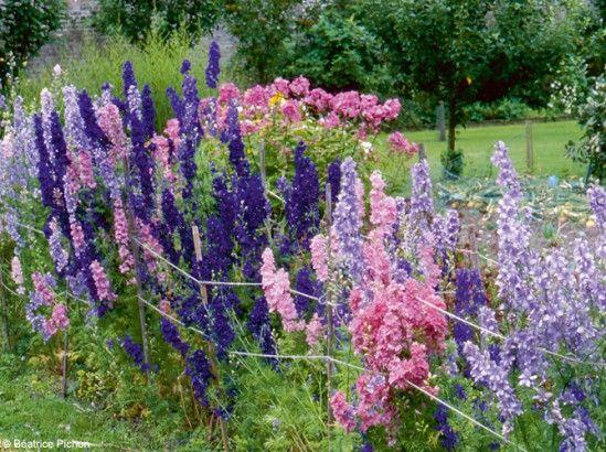 14 fleurs qui ne craignent pas l 39 hiver dauphinelles plantes et lieux - Plantes qui ne craignent pas le gel ...