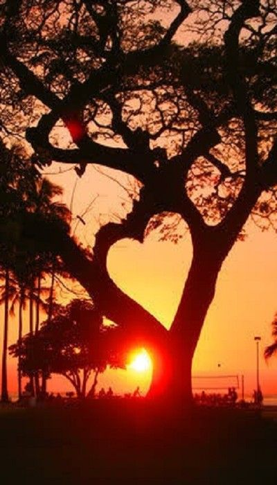 Sunset heart tree that can remind you to remember the things you loved from the day.: