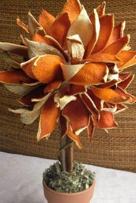 Árbol pequeño con cáscaras de naranjas