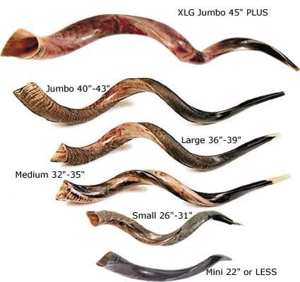 The mini shofar is what Hildegard would have.