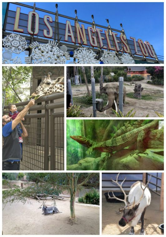Guide To The Los Angeles Zoo And Botanical Gardens Momsla Los Angeles Zoo Los Angeles Parks Zoo