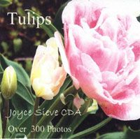 Great tulip photos