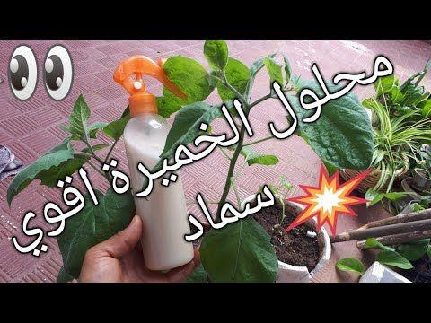 الخميرة سمادطبيعي قوي يعالج ويقوي ويسرع نمو النبات Fertilizer For Plants Chgoura Tv شكورة تي في Youtube In 2021 Plant Problems All Plants Plants