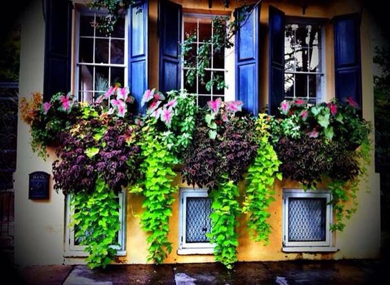 Charleston Windowboxes