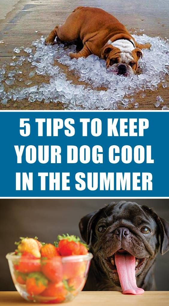 Pin By Steve Lara On Dog Dog Care Tips Dogs Outside Dogs