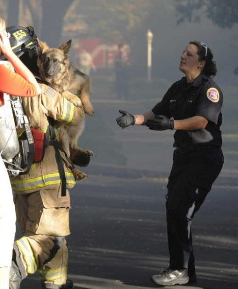 Firefighters rescue German shepherd, Jenni, from her burning home. Photo Credit: Christopher Winterfeld/Merced Sun-Star