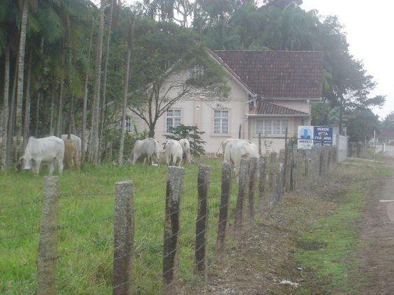 Pirabeiraba - Estrada da Ilha - 5.000 m² c/ matrícula