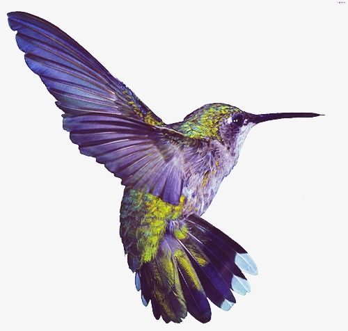Hummingbird Hummingbird Clipart Birds Png Transparent Clipart Image And Psd File For Free Download Hummingbird Pictures Hummingbird Tattoo Hummingbird Wings