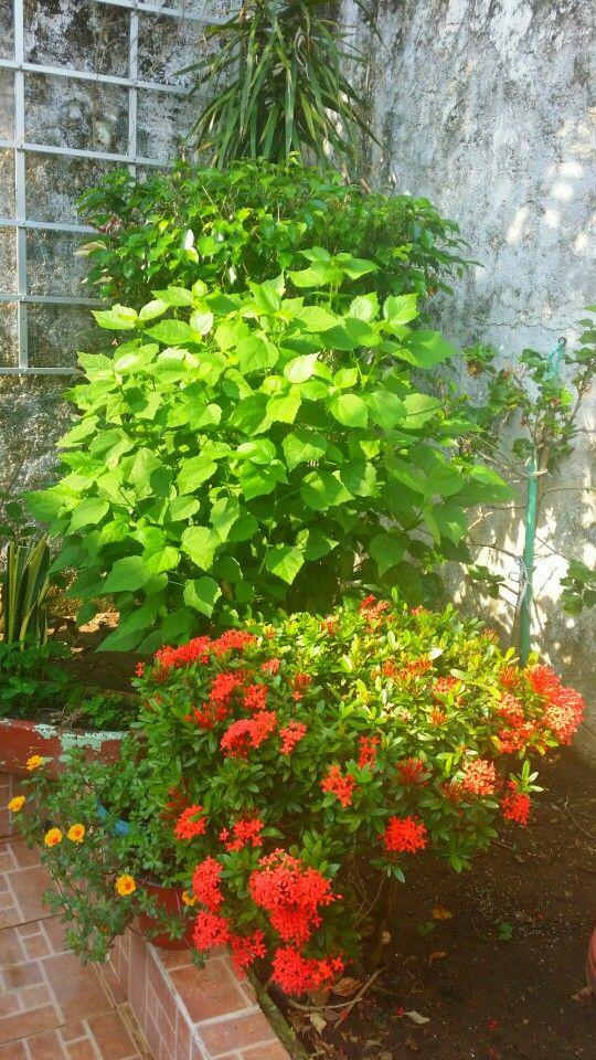 Mi jardín!!