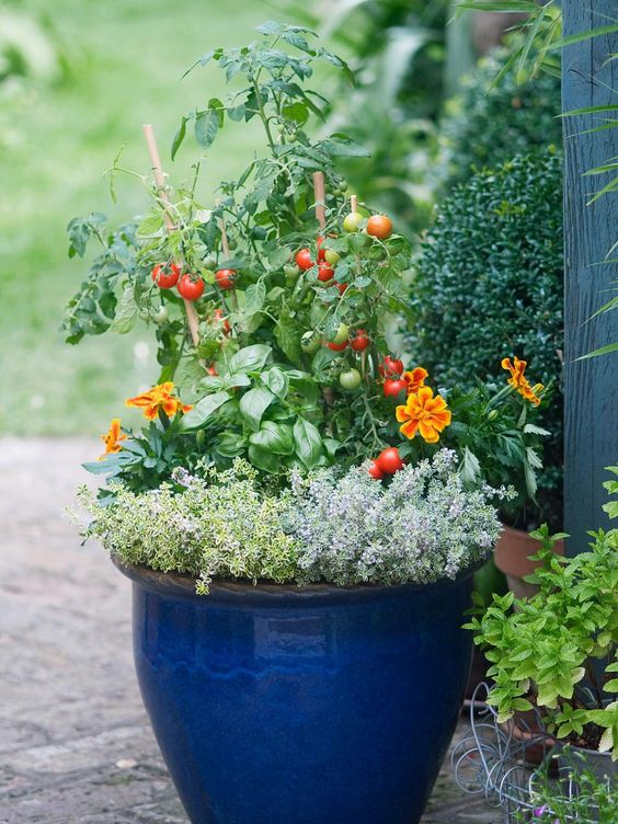"""Planting taller vegetables, like tomatoes, with lower-growing herbs and flowers will encourage pollinators and create a balanced container garden. The """"thriller, filler, spiller"""" concept of container design — with a tall, spiky plant in back, a mounding plant in the center, and a trailing plant in the front — works great for edible containers as well. Thyme is a go-to trailer."""