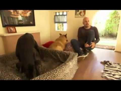 Cães com casa de dois andares: Discovery Channel - YouTube