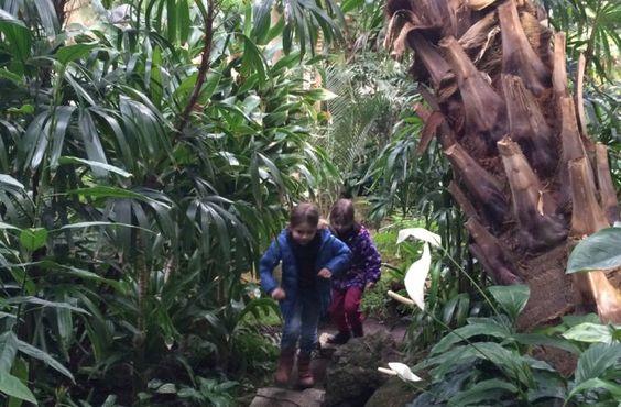 Natur unter Dach und Fach - Palmengarten Frankfurt