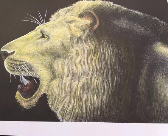 Lion by Isabel Farinha Gallione