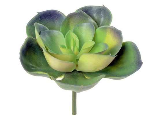 Hauswurz (Sempervivum) von vbs-hobby-versand auf DaWanda.com
