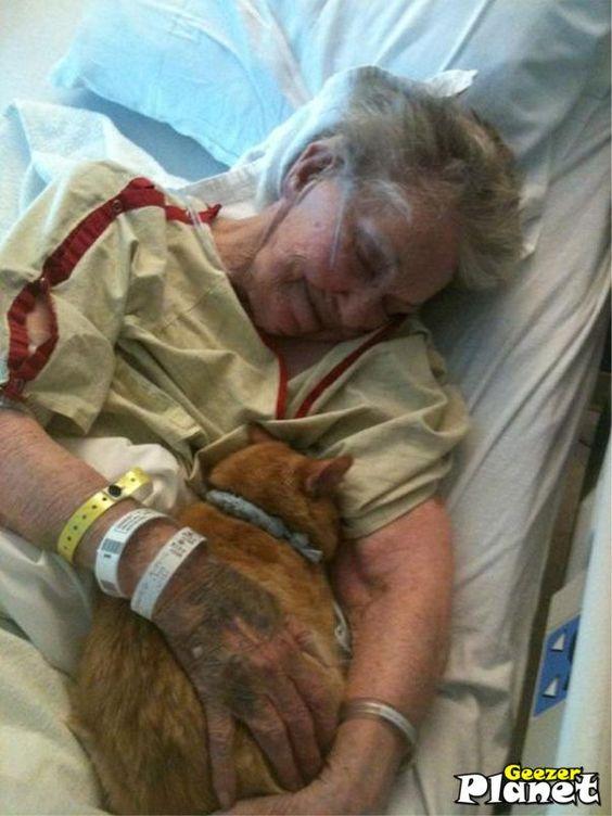 L'ospedale in cui questa nonna vive i suoi ultimi giorni, ha permesso al suo gatto di visitarla. Inestimabile.