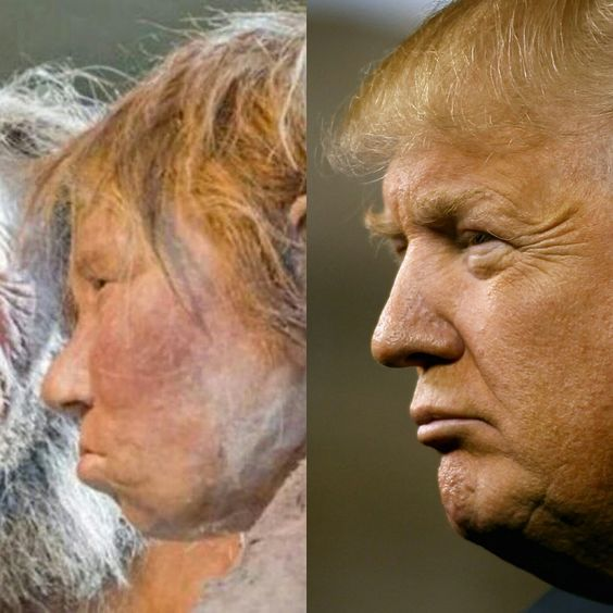 Neanderthal vs Donald Trump! close enough! - Album on Imgur: