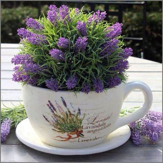 Latest lavender plant dubai for 2019