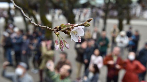 - Pessoas observam uma cerejeira no Santuário de Yasukuni, em Tóquio, no Japão. Foto: Kazuhiro Nogi / AFP